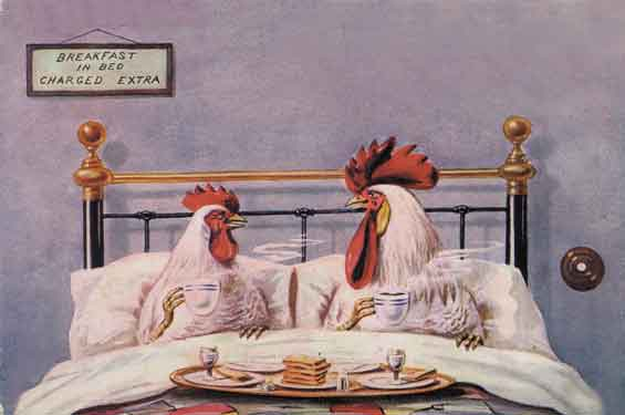 Hen_rooster_in_bed-778690